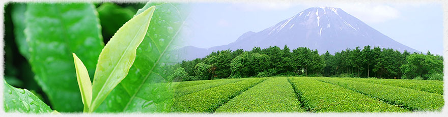 大山と新茶