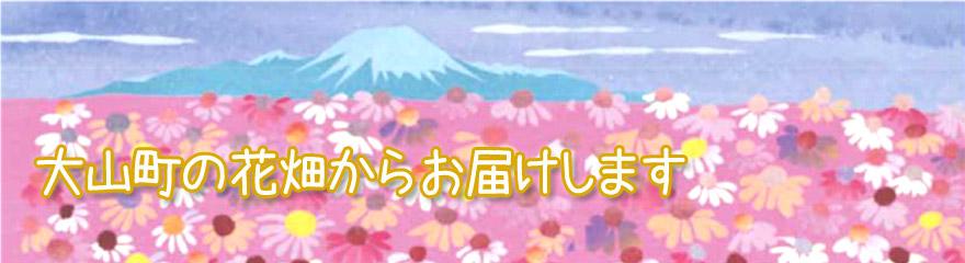 エキナセアイラストトップ画像