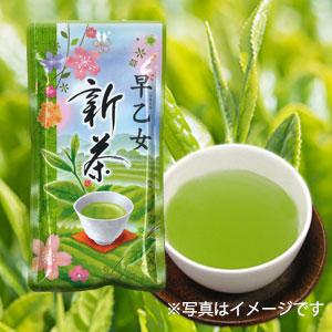 新茶早乙女A2020